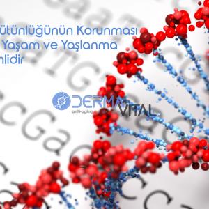Telomer Uzunluğu