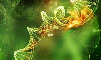 Telomer Biyolojisi