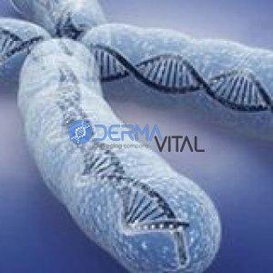 Telomerleri Uzun Tutmak