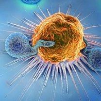 Bağışıklık Sistemi ve Telomer Kısalması Arasındaki Bağlantı