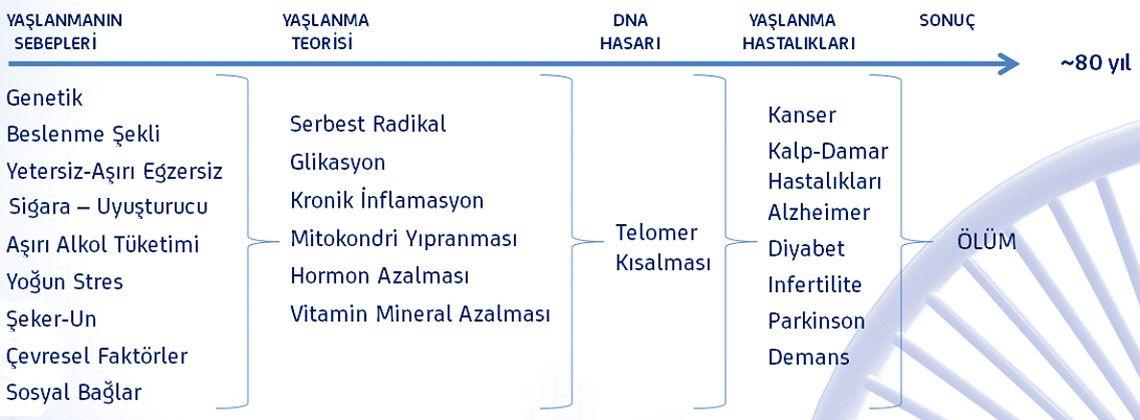 telomer tedavisinde yaşlanma süreçleri